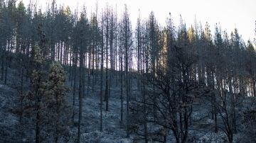 Zonas afectadas por el fuego del incendio forestal en el Barranco Los Pajaritos