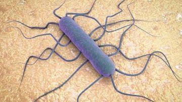 La bacteria de la listeria vista a microscopio
