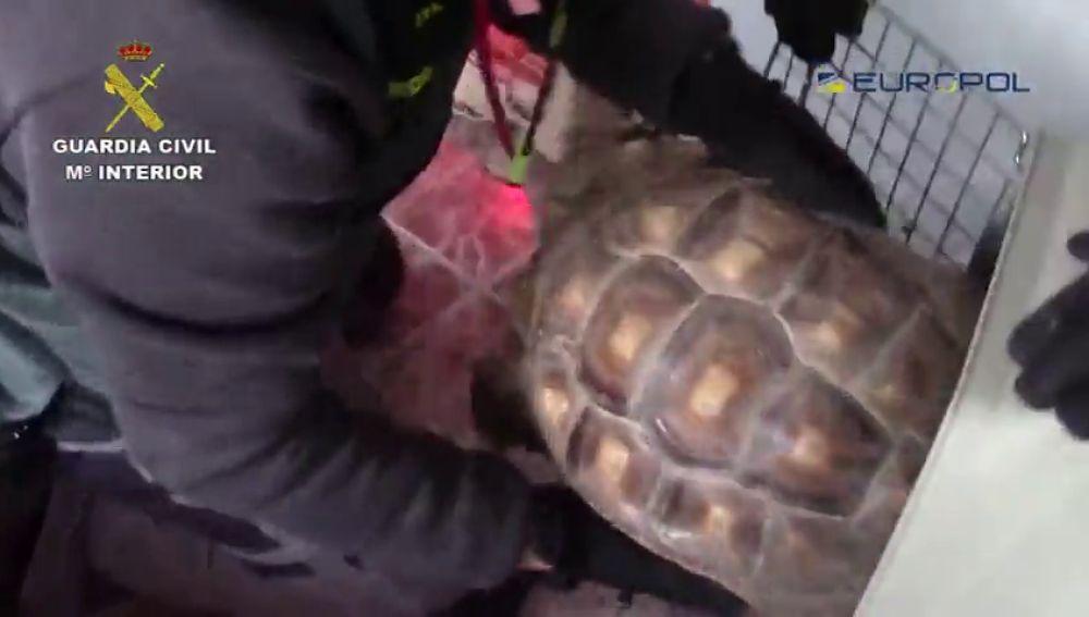 Diez detenidos en España por tráfico ilegal de especies protegidas que iban a Marruecos