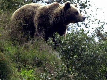 Imagen de archivo de un oso