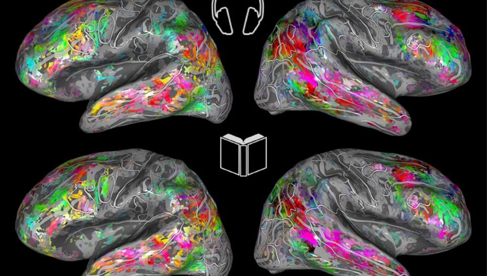 Mapas que muestran las similitudes entre el procesamiento semántico de palabras escuchadas (arriba) y leídas (abajo).