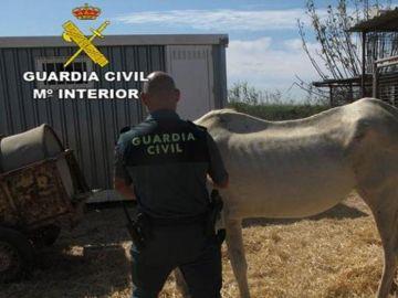 Imagen de uno de los caballos hallados desnutridos y abandonados en Sevilla