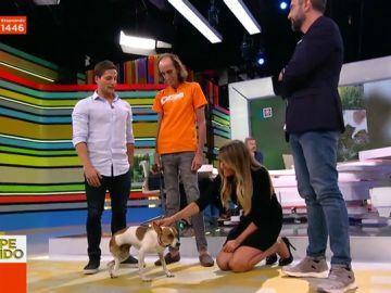 Gotzon Mantuliz se estrena en Zapeando con Esperanza, una perrita abandonada y sin una pata que por fin tiene un hogar