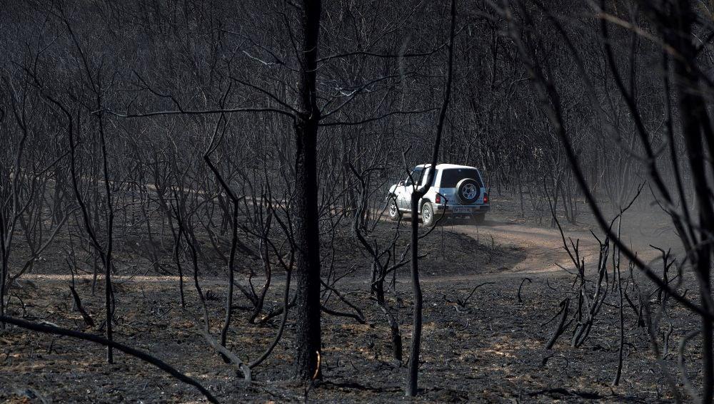 Un coche circula por un monte devastado por las llamas en Mañente, Monforte