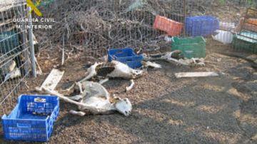La Guardia Civil halla decenas de cadáveres de ganado y animales desnutridos