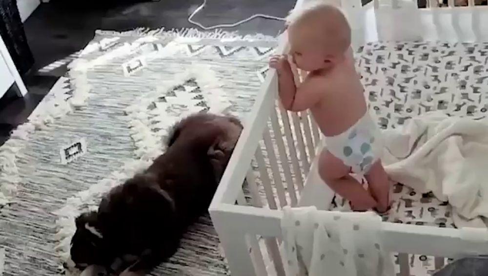 Una madre instala una cámara en la habitación de su hijo y descubre que hacen por la noche el perro y el bebé
