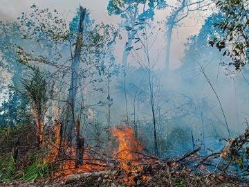 Incendio en la Amazonia