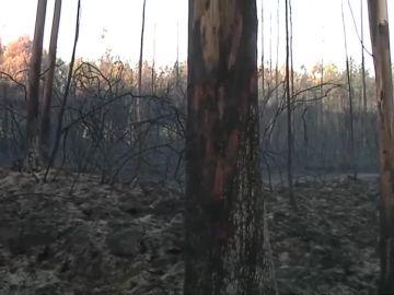 Incendio declarado en Culleredo