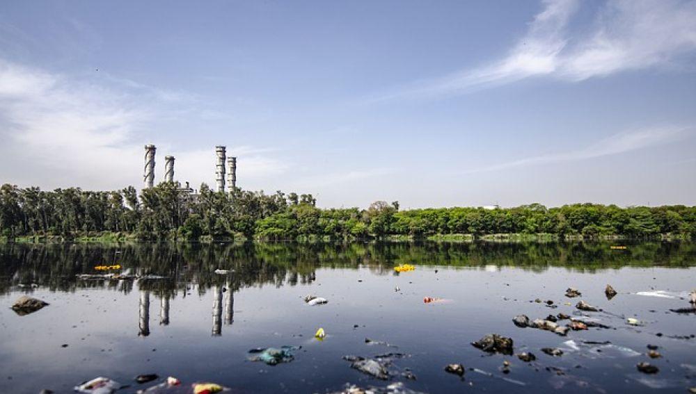 Algas y bacterias forman equipo para aumentar la produccion de hidrogeno