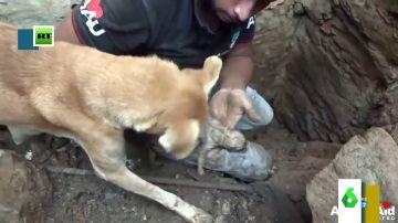 El entrañable vídeo de una perrita intentando rescatar a sus cachorros que emociona a Miki Nadal