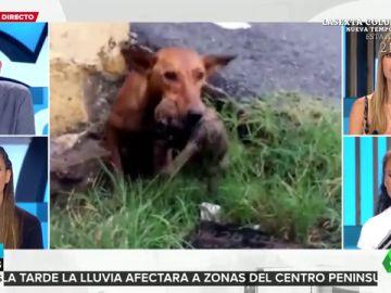 rescate cachorros