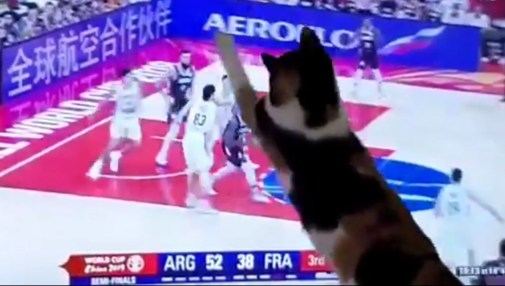El gato 'defensor' de Argentina en el Mundial