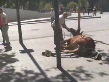 Acusan de maltrato a un cochero tras caer su caballo en Sevilla y se desata una violenta bronca en la calle