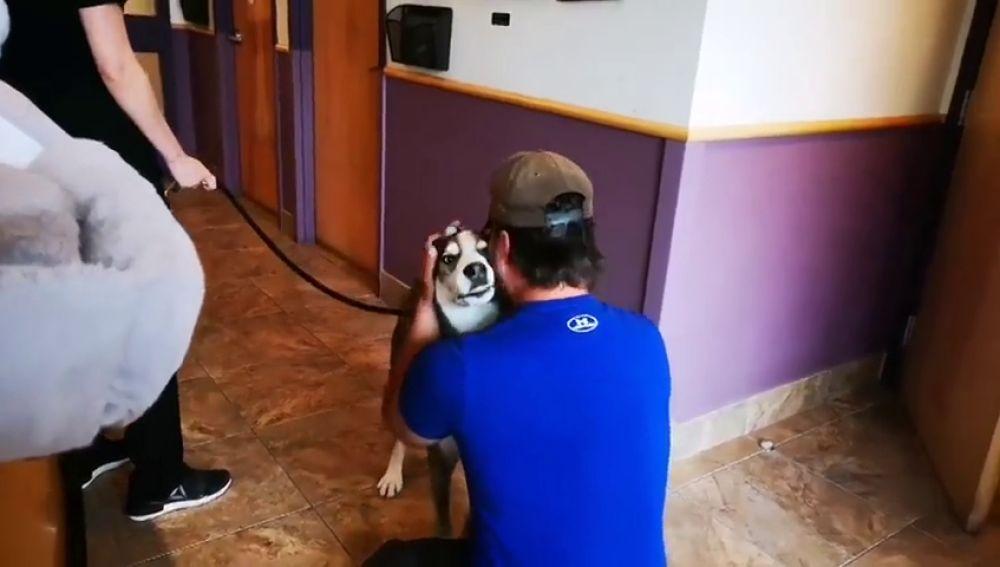 La intrahistoria del emotivo reencuentro entre un hombre y su perro cuatro años después de perderlo