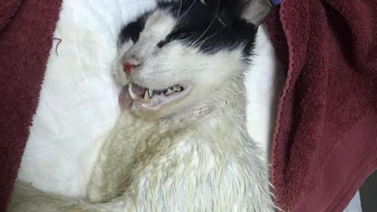 Imagen de un gato rociado con ácido en Bunyola -Mallorca-