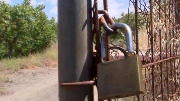 Campos de aguacates convertidos en búnkeres: así protegen los agricultores su oro verde de los robos