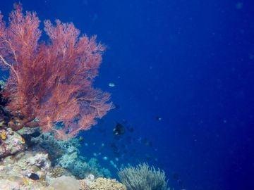 La crisis de la biodiversidad reorganiza las especies a gran escala