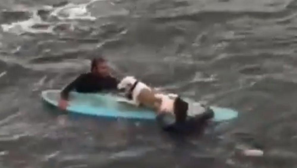 Dos surfistas logran rescatar a un perro en Getxo