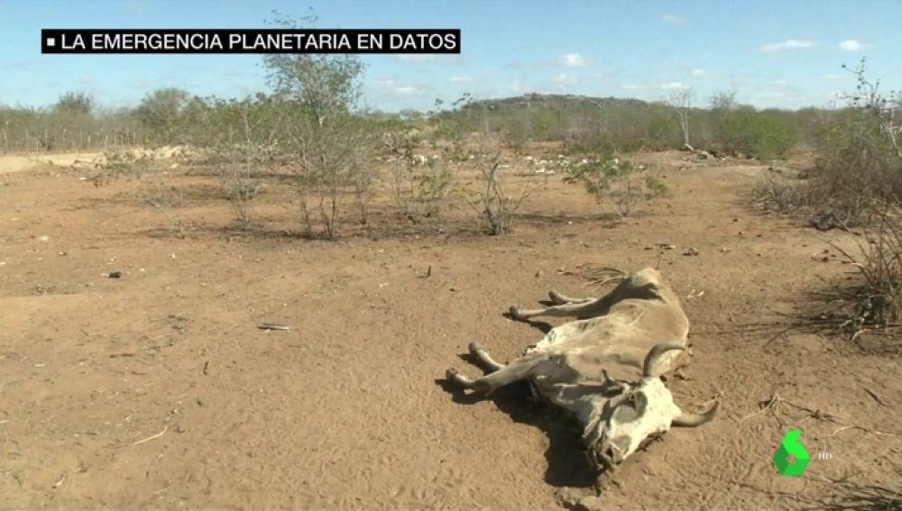 Los datos que alertan de la emergencia planetaria: han desaparecido el 60% de los vertebrados en sólo 50 años