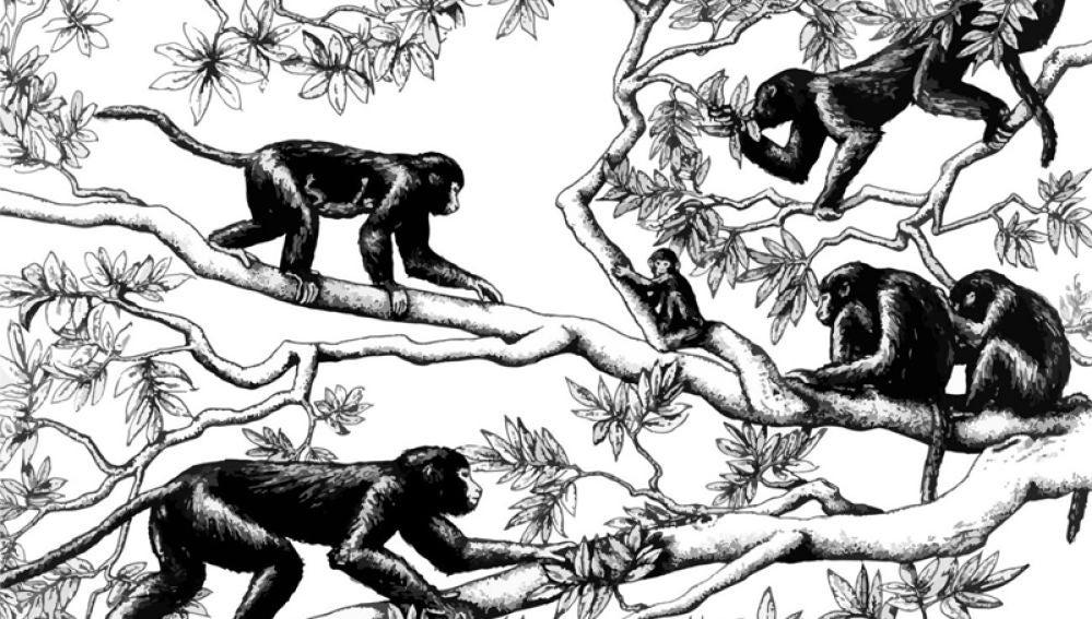 Un femur de 30 millones de anos arroja luz sobre la evolucion de los primates