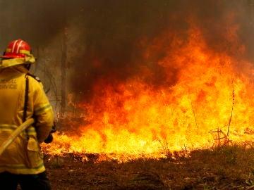 Oleada de incendios en Nueva Gales del Sur, en Australia