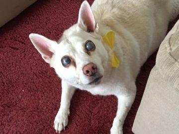 Imagen de la perra que se quedó ciega por el estrés que le produjeron los fuegos artificiales