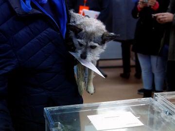 Un perro en un colegio electoral durante las elecciones del 10N