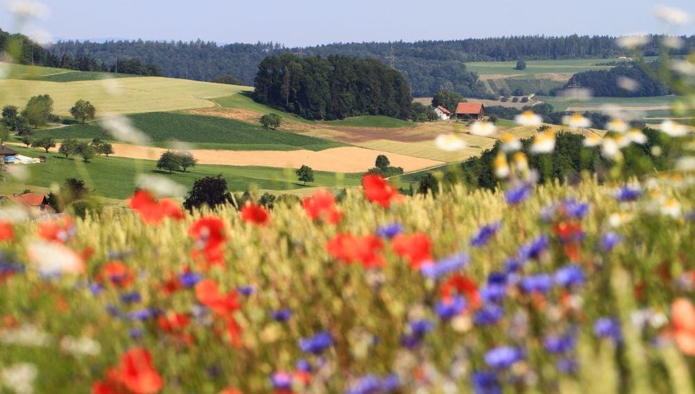 La biodiversidad mejora el rendimiento del los cultivos