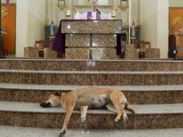 Perro descansando en una misa del sacerdote João Paulo Araujo Gomes