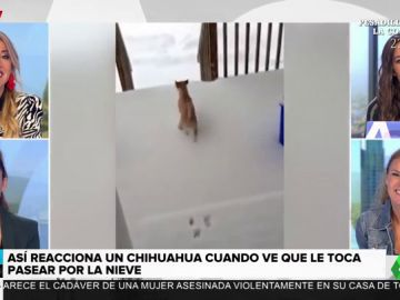 La divertida reacción de un chihuahua al ver que tiene que pasear con nieve