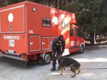 Imagen de archivo de un bombero con un perro