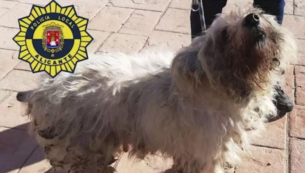 36 perros mestizos estaban hacinados en una vivienda de 50 metros en Alicante