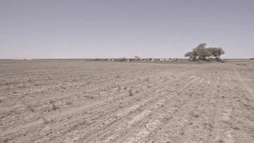 Enviado Especial sigue el rastro de la soja hasta una zona devastada por las plantaciones de un empresario español