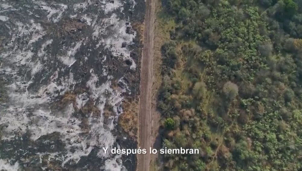 """Así marca la soja el antes y el después del Gran Chaco, el segundo bosque más grande después del Amazonas: """"Se están comiendo el bosque"""""""