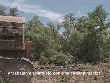 Con grandes tractores que arrastran cadenas: así se acaba con árboles de más de 100 años en el Gran Chaco