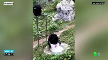La increíble imagen de un chimpancé lavando ropa en un zoo de China