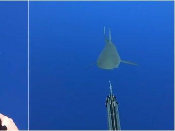 Un tiburón acecha a un buceador