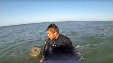 Una foca y un surfista