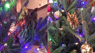 Imágenes del búho en el árbol de Navidad.