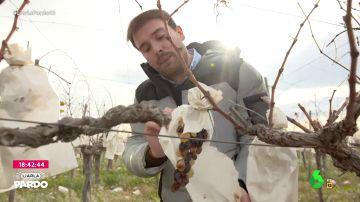 La uva más consumida en nochevieja, en estado crítico: así es la crisis que atraviesan en Vinalopó