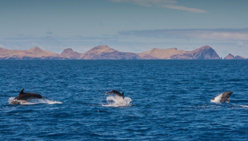 Delfines en Madeira