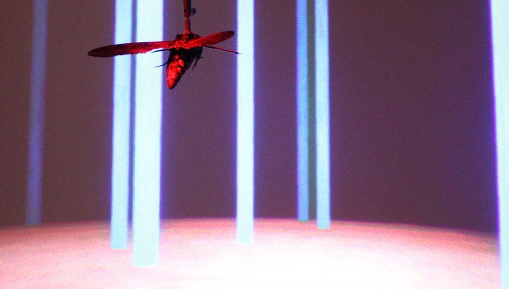 Las trayectorias de vuelo de las polillas mejoran la navegacion de los drones