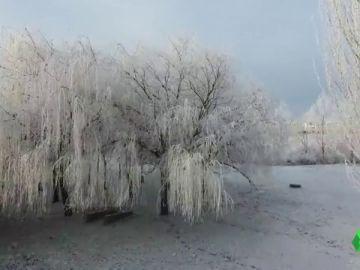 Árboles y campos helados: espectaculares imágenes de la cencellada en Salamanca
