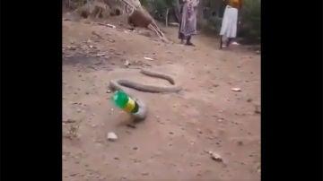 Una serpiente vomita una botella de plástico en La India