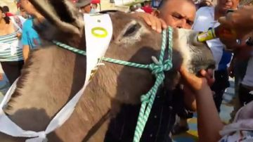 Imagen de burro que fue obligado a beber cerveza por la nariz