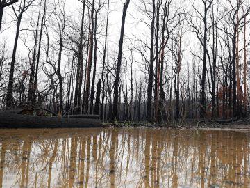 Incendios e inundaciones en Australia