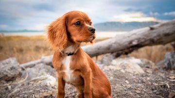 Imagen de archivo de un perro