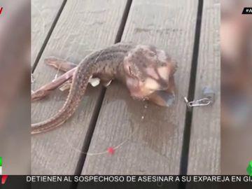 La extraña criatura descubierta en las costas de Nueva York que arrasa en redes