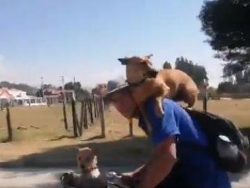 Dos perros con un ciclista.