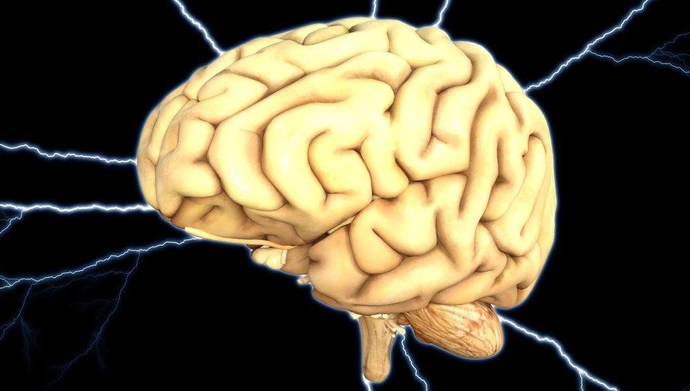 Esta area cerebral tiene una funcion especial en el estado de conciencia